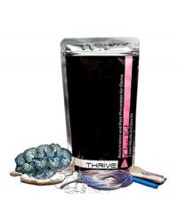 Thrive C Kit Tridacna