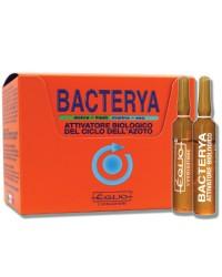 Equo Bacterya
